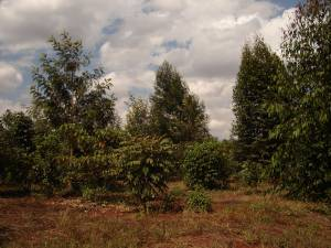The Karura Forest