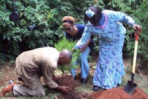 Planting the birthday tree