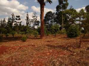 The Karura Forest: Forests are an example of biodiversity on the planet, and typically possess a great deal of species diversity.