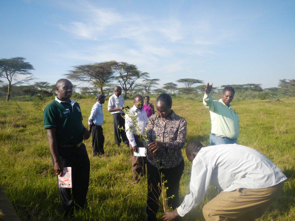 The team inspects one of the seedlings in the project area
