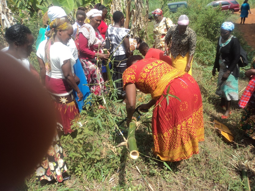Women learn how to prepare culm cuttings