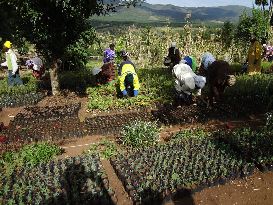 GBM works with a voluntary network of women and their families who form community groups and establish tree nurseries. To date, over 50 million trees have been planted across the country